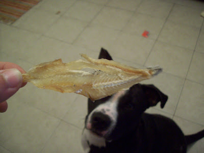 Can Dog Eat Dried Anchovies