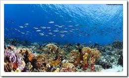 Pulau Komodo 1