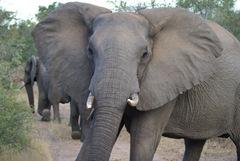 2008-03-08 Africa 241