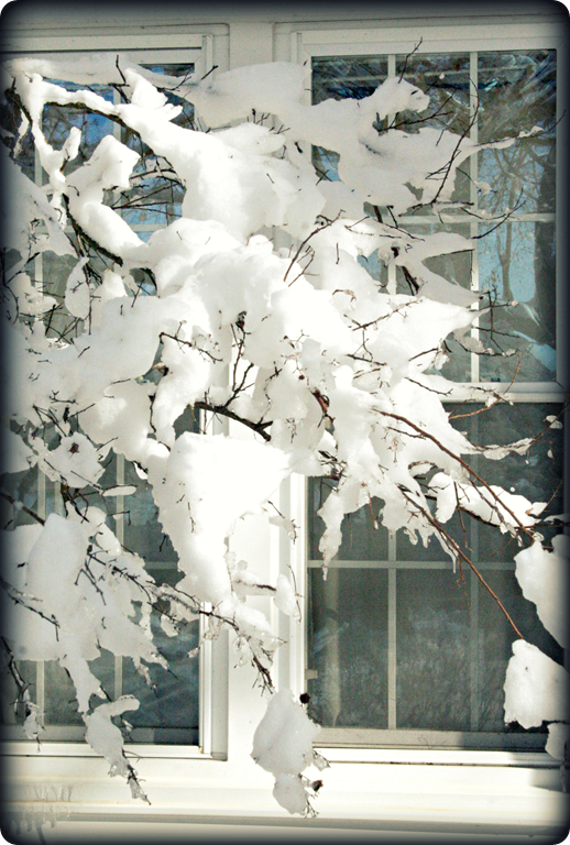 January 2010 057 1