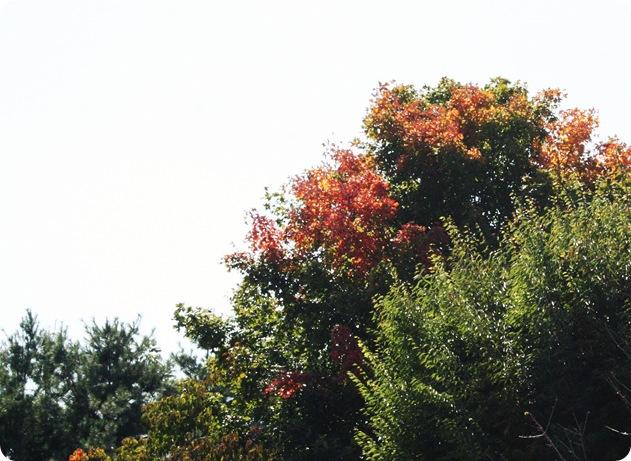 september 2010 055 1