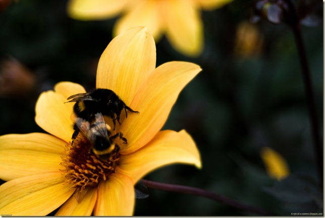 bees-1-2
