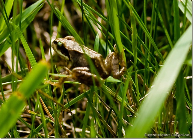 Frog at Watten windmill -1