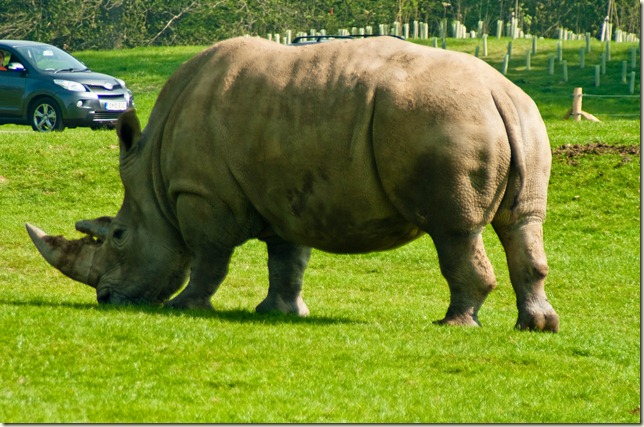 Rhino-1-3