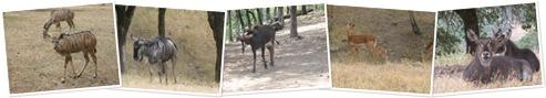 View Antelope
