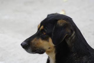 Homeless stray dog