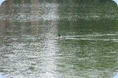 Loon Park Rapids