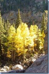 Rocky Mountain National Park Aspen 2