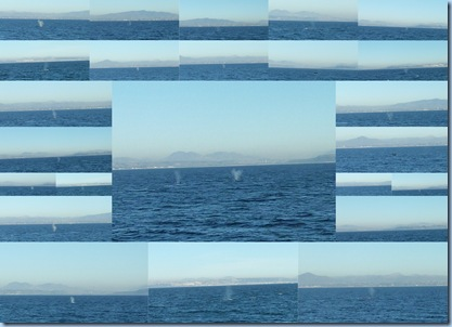 Whale Collage January, 2011
