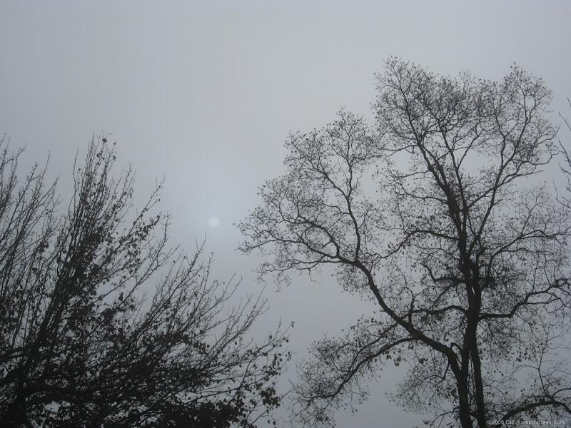 Fog - 1, Sun - 0