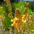 Yellow-orange flora