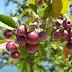 Berries. Blueberries?