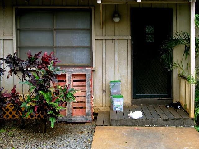 Lazy Haleiwa cats