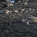 Turtles are resting