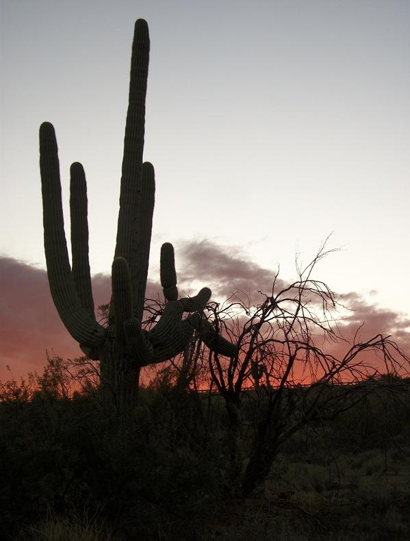 AU-BCS-Trip_Phoenix_2011 089
