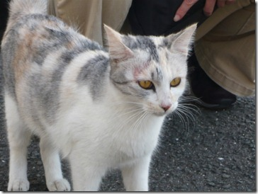 imamura-image010