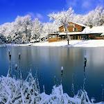 Christmas Nature 3.jpg