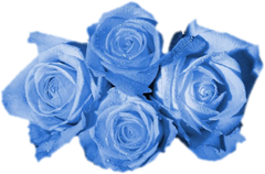 ROSAS_LADY_MEL (2)