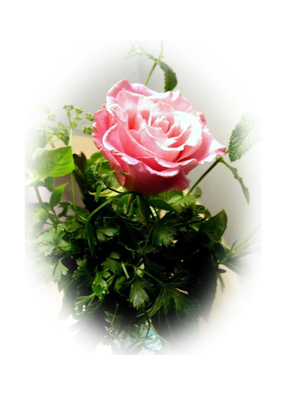 rose edge