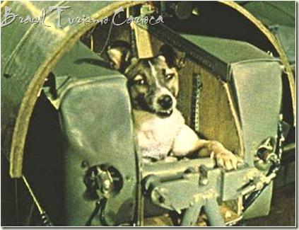 Cadelinha Laika, primeiro ser vivo enviado ao espaço, á bordo da nave soviética Sputnik II, em 3 de novembro de 1957. Laika morreu na reentrada da nave, provavelmente pelo stress a que foi submetida