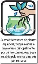 planta aquatica