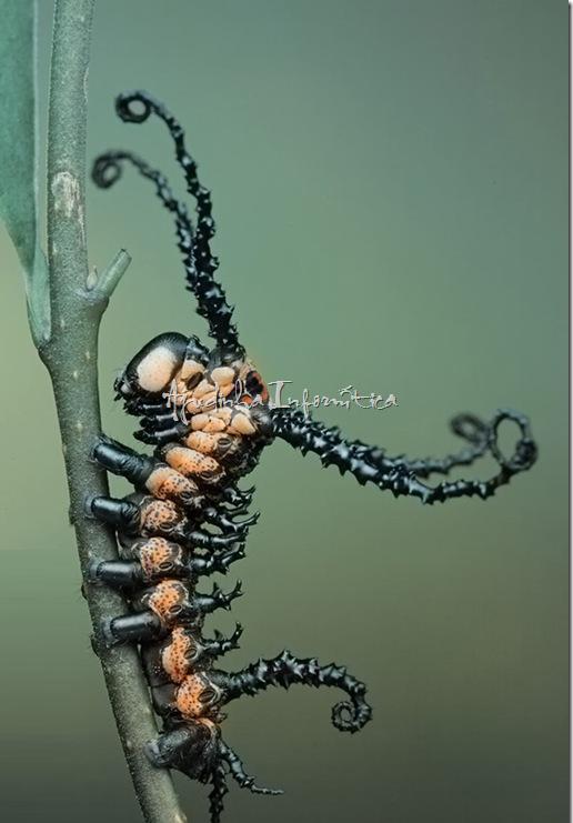 insetos incriveis ajudinha informatica 6