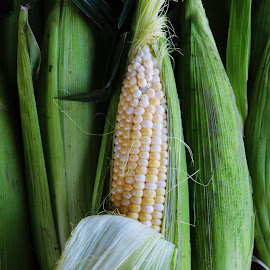 The Corny County by Hannah Cohen - Nature Up Close Gardens & Produce ( home grown, green, white, fruite, ontario, yellow, corn, country, picton, veggatables, ear, farmer, farmer's market, county, corn on the cob, sales, corny, produce )