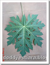 papaya leaf 2