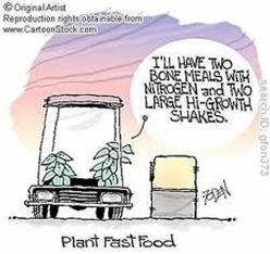 plant fasf food
