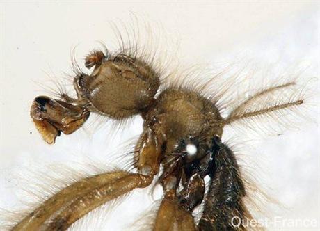 La Mormotomyia Hirsuta a été repérée à nouveau par des entomologistes dans une crevasse située à 200 kilomètres environ à l'est de Nairobi (Kenya)