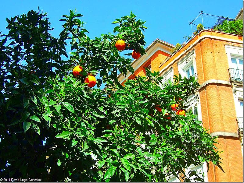 Spring 2011 (Tirso de Molina, Madrid) 003