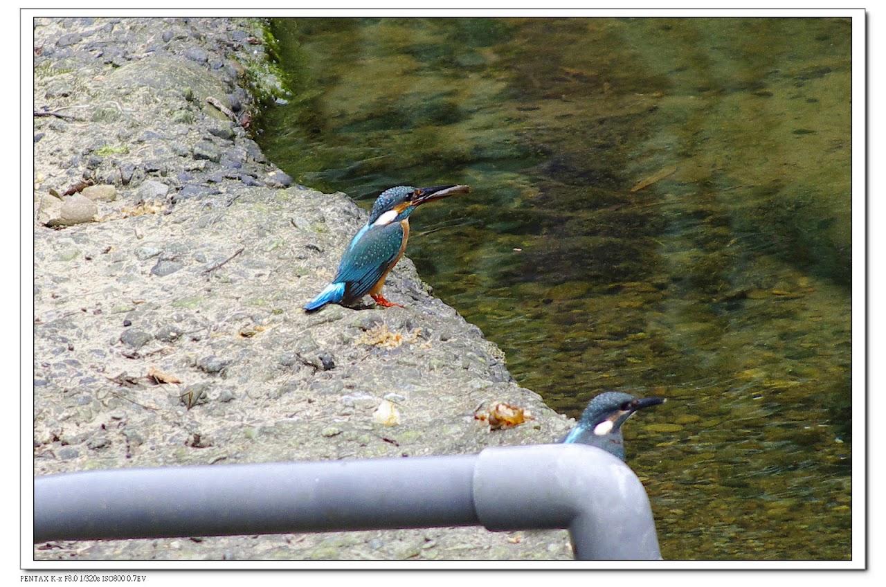 2010-05-22-富陽公園&老泉里練習