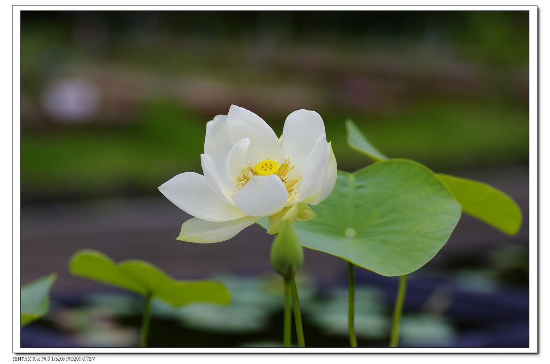 2010-05-30-富陽公園&植物園練習