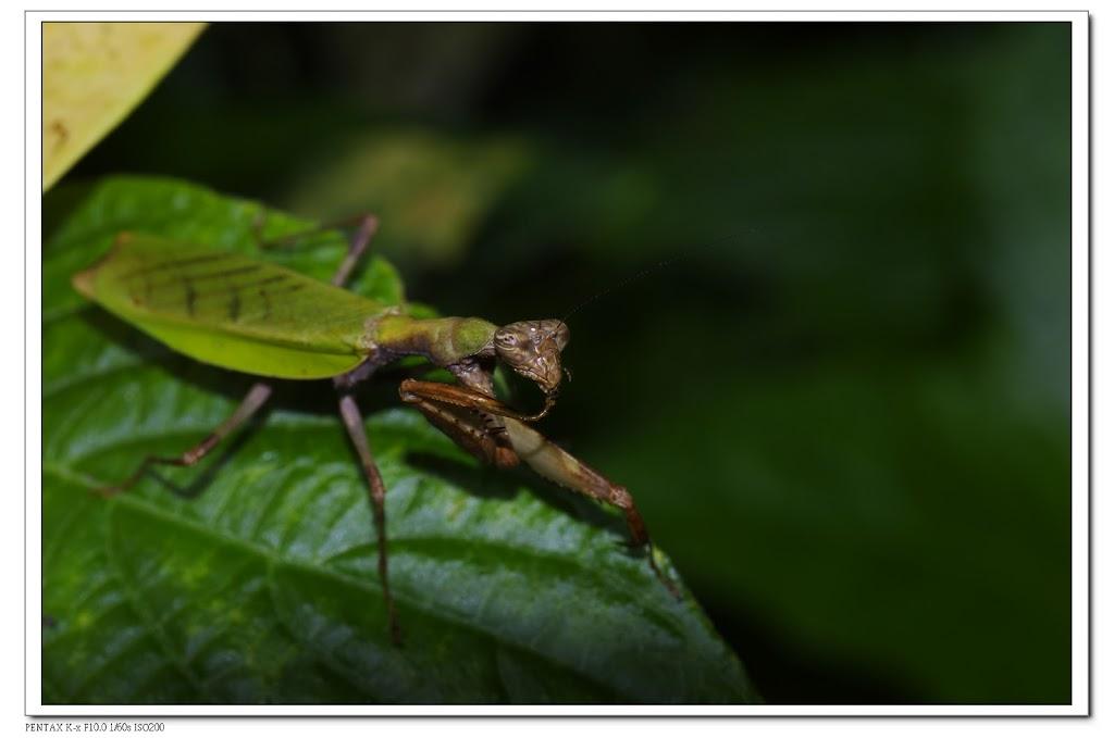 2010-06-26-富陽公園螳螂&蟬
