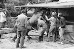Kování koní nemusí vždy být hračka. Na fotce vpravo Leša.