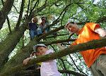 Na stromě u Vlašimi