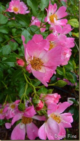 around the garden_060
