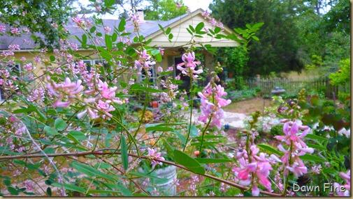 around the garden_077