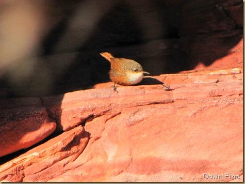 birding with pat_018