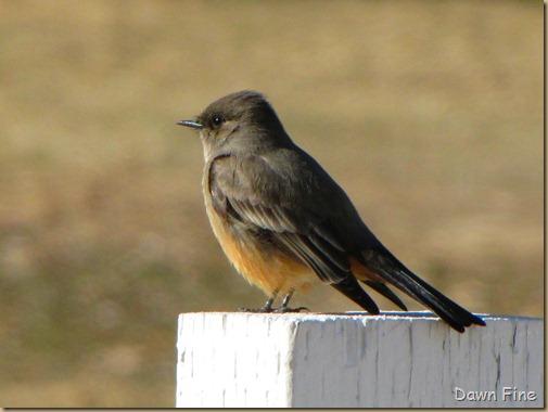 birding with pat_042