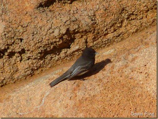 Desert museum_035