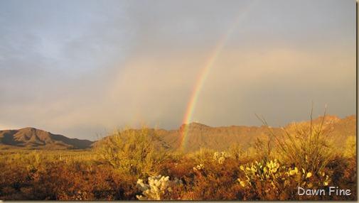 rainbow desert_022