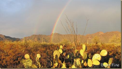 rainbow desert_018
