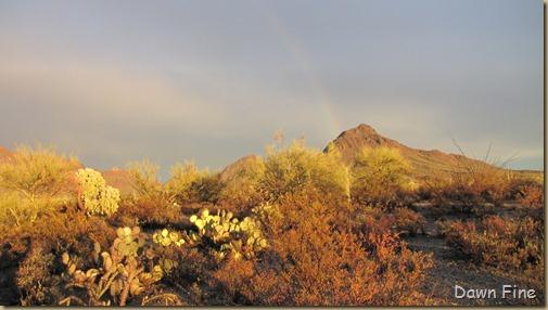 rainbow desert_019