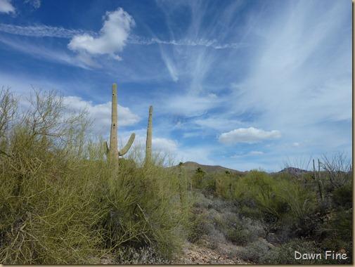 Desert museum_162