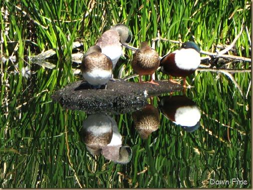 sweetwater wetlands_065