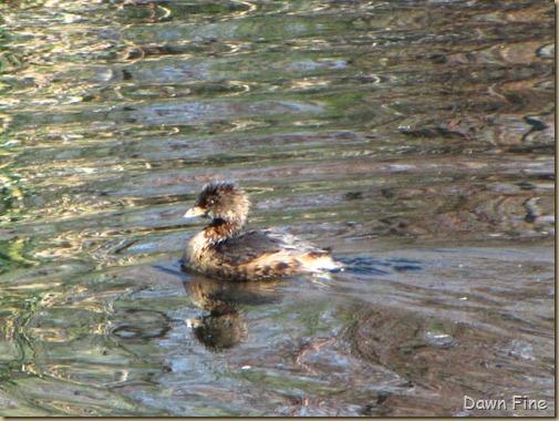 sweetwater wetlands_115