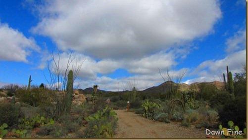 Desert museum_244_thumb
