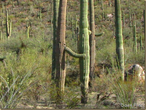 Sonoran NP west_032