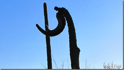 Sonoran NP west_083